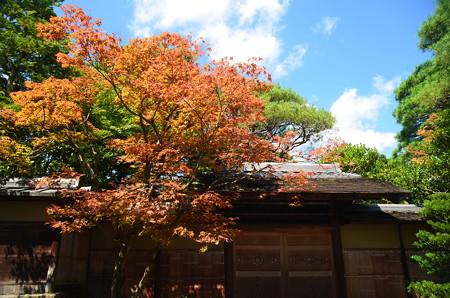 南禅寺付近の色付き