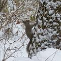 リスの木登り...P1010272