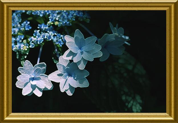 5つの花びら
