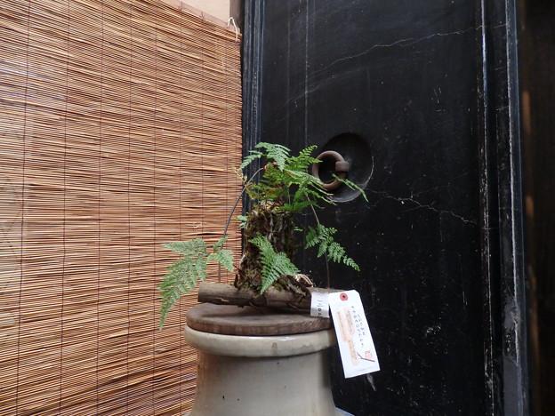 パッと見だと、シダ植物を組んだ飾りに見えますが...