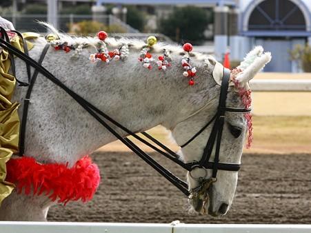 川崎競馬の誘導馬01月開催 梅Ver-120124-24
