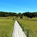 広大な池の平湿原と遊歩道