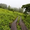 木道散策路