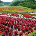 御岳ロープウェイ山麓駅のお花畑