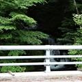 橋欄干よりの滝