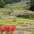 Photos: 収穫の秋景色