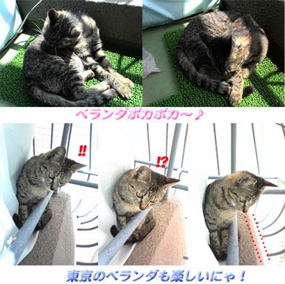 2005/5/9 東京のベランダー