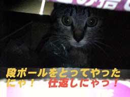 2005/5/16-4【猫写真】天敵現る!!
