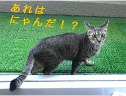 2005/5/16-1【猫写真】天敵現る!!