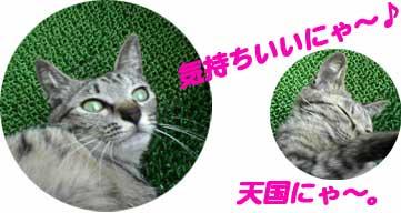 2005/6/20 天国にゃ!?
