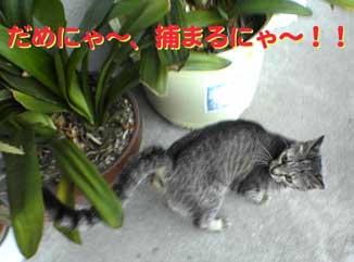 2005/6/2-2【猫写真】脱走したにゃ!