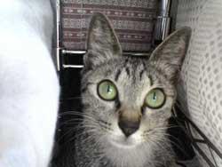 2005/7/16【猫写真】隠れたにゃ!
