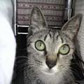 Photos: 2005/7/16【猫写真】隠れたにゃ!