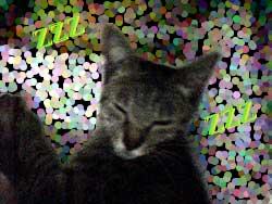 Photos: 2005/7/26【猫写真】加工済みにゃ!
