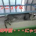 Photos: 2005/7/29【猫写真】アンニュイにゃ夏のAM