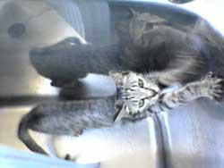 2005/7/18【猫写真】にょび~