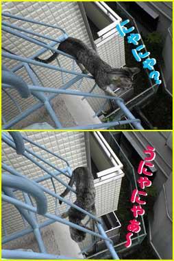 2005/7/24【猫写真】にゃにゃ、うにゃにゃ~