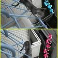 Photos: 2005/7/24【猫写真】にゃにゃ、うにゃにゃ~