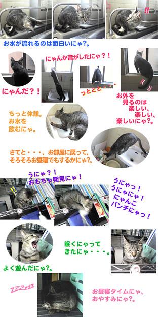 2005/7/1【猫写真】はっぴぃにゃ一日♪