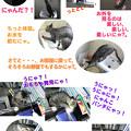 Photos: 2005/7/1【猫写真】はっぴぃにゃ一日♪