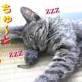 Photos: 2005/7/17【猫写真】ちゅ~とお昼寝ちぅ