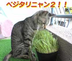 2005/7/31【猫写真】べじたりにゃん2!