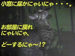 2005/7/10【猫写真】脱出成功ニャ!!