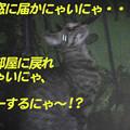 Photos: 2005/7/10【猫写真】脱出成功ニャ!!