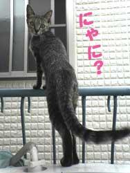 2005/7/9【猫写真】にゃに?