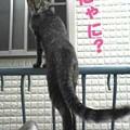 Photos: 2005/7/9【猫写真】にゃに?