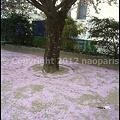 写真: P3070626