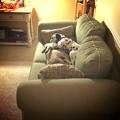 Photos: 我が家の番犬…