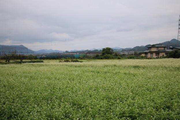 民家近くの蕎麦畑