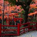 Photos: 『秋の足音。。。』