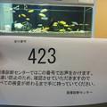 Photos: し・に・み-やげ