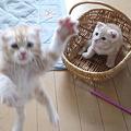 Photos: ワア!!