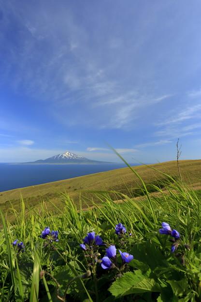 写真: 花の浮島