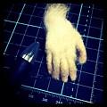 写真: 手
