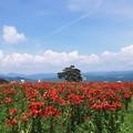 Photos: 夏空3