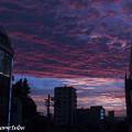 Photos: Purple Sky