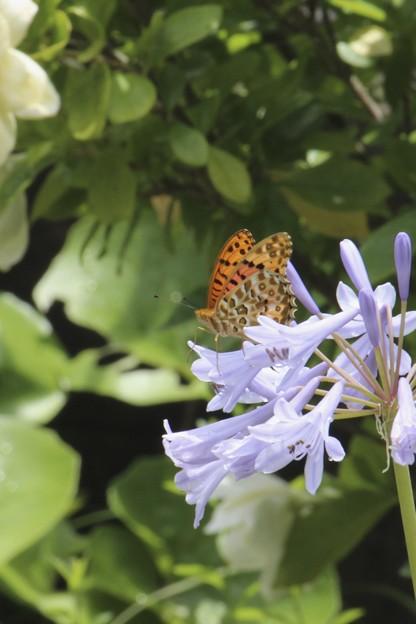 第一回川柳大会「蝶々」