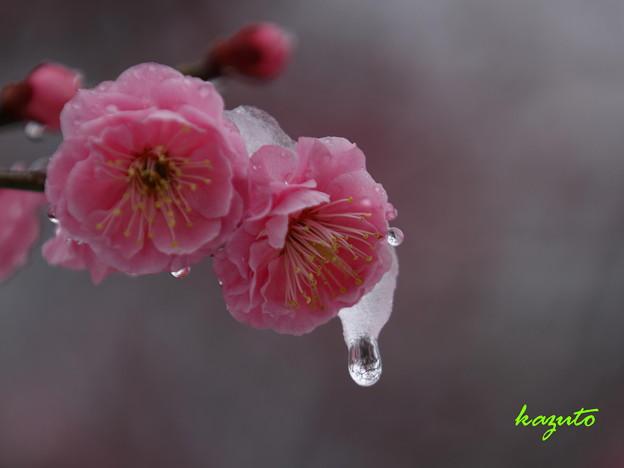 Photos: 春まだ遠し…