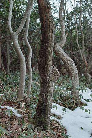 Trees02062012dp2
