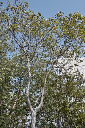 trees03212012dp1-09