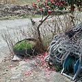 Photos: flower03292012dp2-03