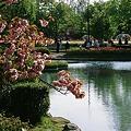 Photos: Cherry_blossom_CONTAX159MM_FUJI_Provia100F05052011