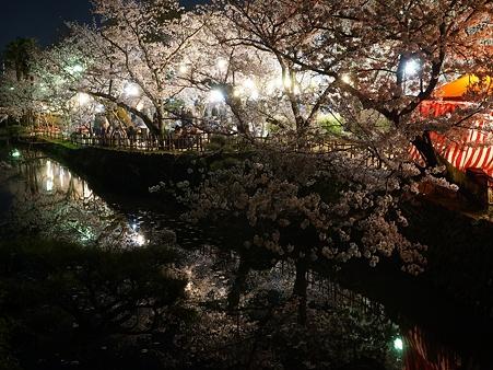 夜の道後公園