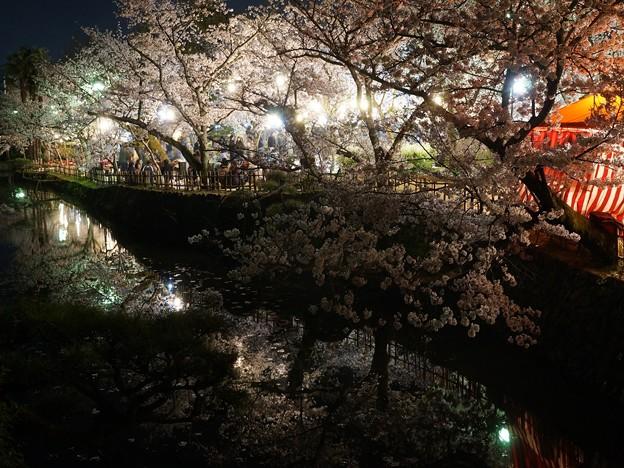 写真: 夜の道後公園