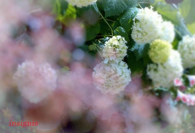Photos: 'Annabelle'........