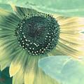『第一回川柳大会』向日葵